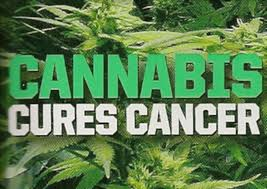 cannabis-cures-cancer.jpg